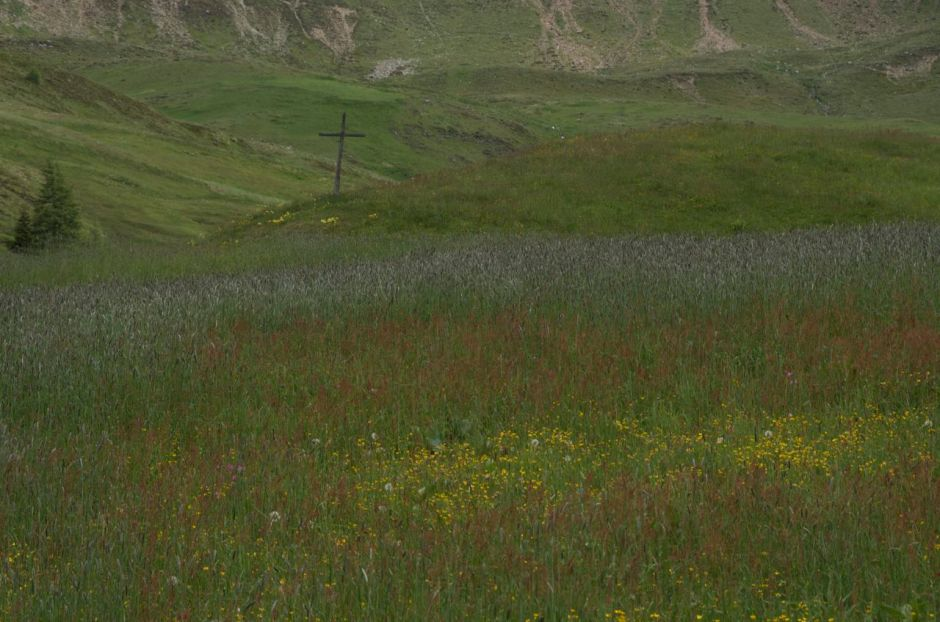 Swathes of colour, red sorrel, yellow buttercups and grass seeds